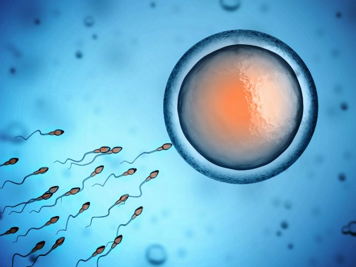 sperm fertilizing ovum - What services does Planned Parenthood provide?