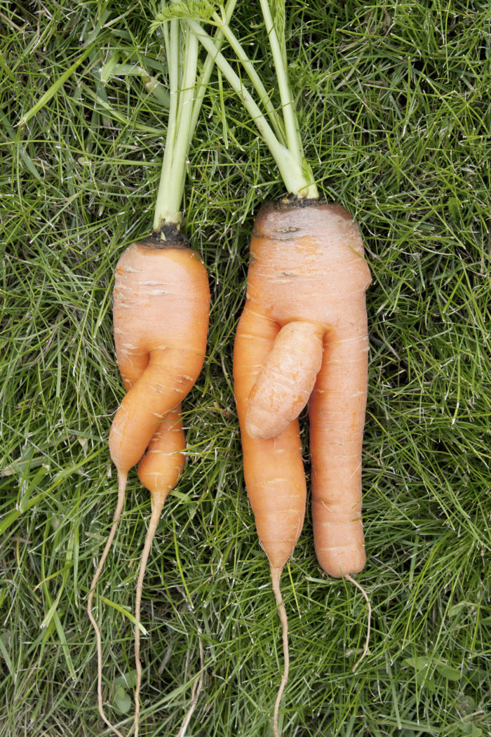 Carrots similar to girl and  boy